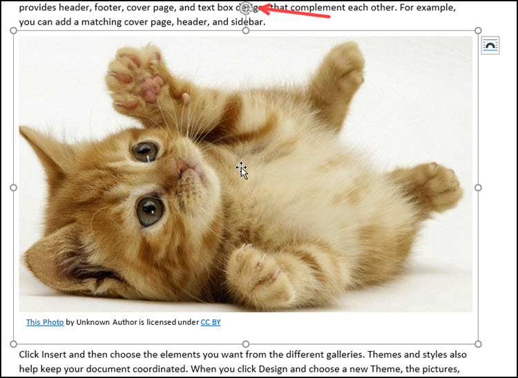 Kitten image with rotation control and sizing handles.
